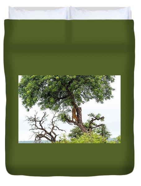 Leopard Descending A Tree Duvet Cover
