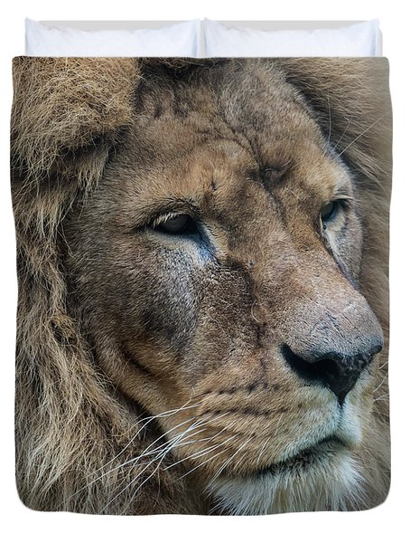 Duvet Cover featuring the photograph Lion by Anjo Ten Kate