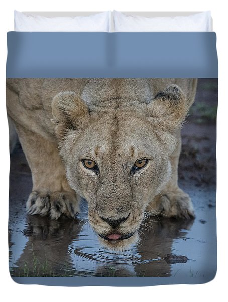 Lioness Drinking Duvet Cover