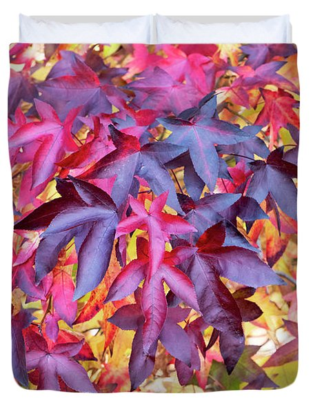 Liquidambar Foliage In Autumn Duvet Cover