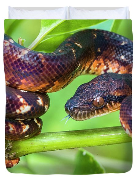 Madagascar Ground Boa Acrantophis Duvet Cover