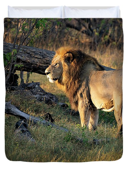 Male Lion In Botswana Duvet Cover