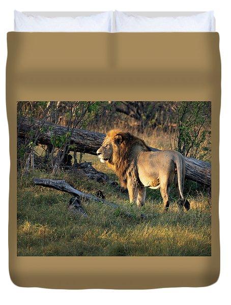 Male Lion In Botswana Duvet Cover