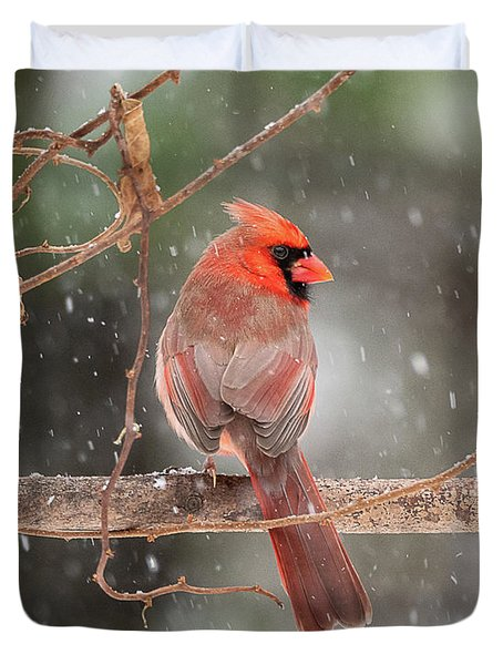 Male Red Cardinal Snowstorm Duvet Cover