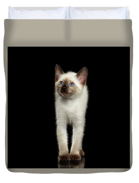 Mekong Bobtail Kitty With Blue Eyes On Isolated Black Background Duvet Cover