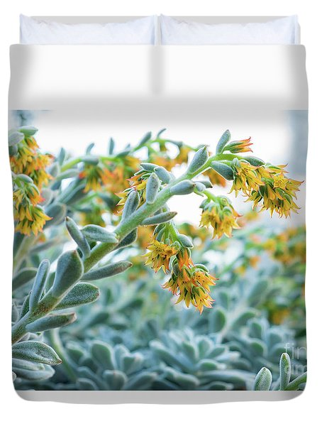 Mexican Echeveria In The  Morning Duvet Cover