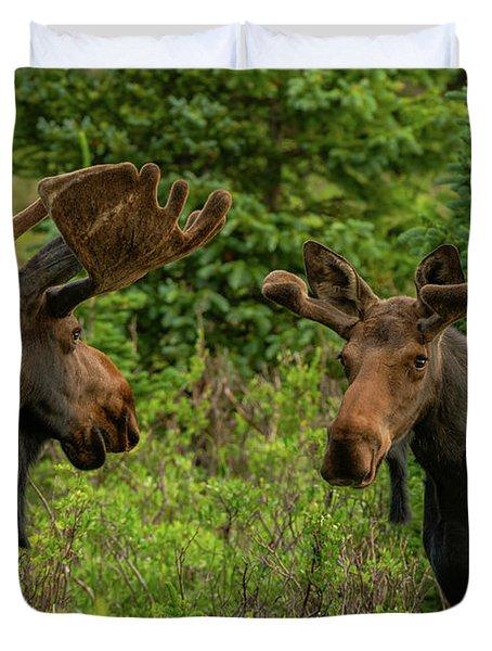 Moose Conversations Duvet Cover