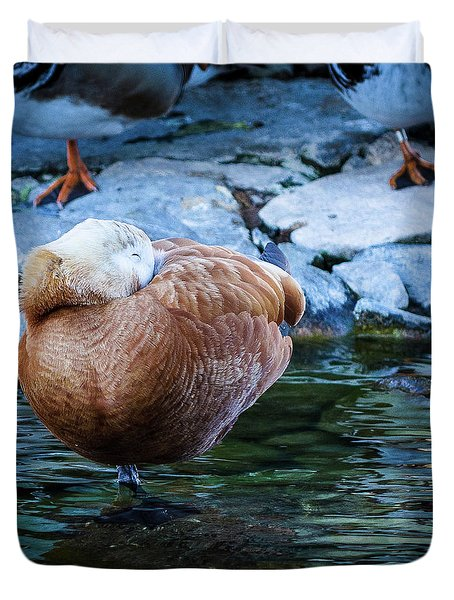 Napping At The Pond Duvet Cover
