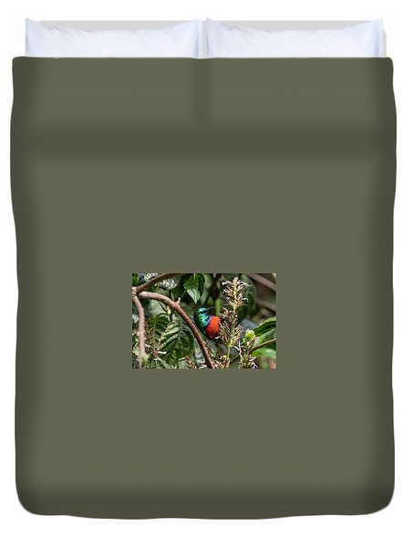 Northern Double-collared Sunbird Duvet Cover