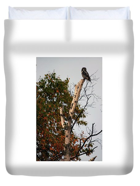 Northern Hawk Owl 101402 Duvet Cover