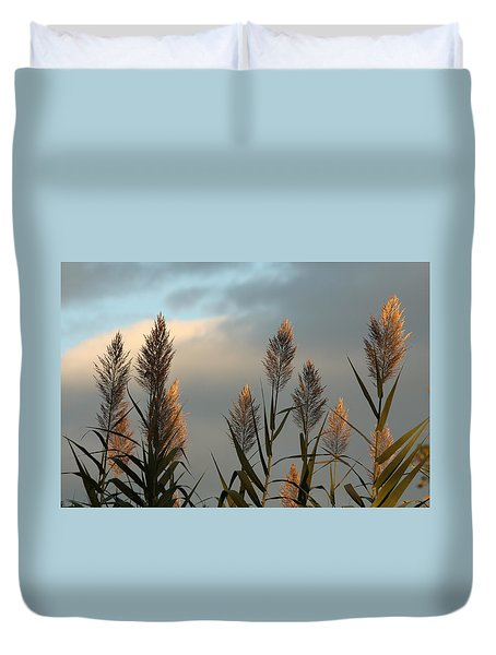 Ornamental Pampas Grass Duvet Cover