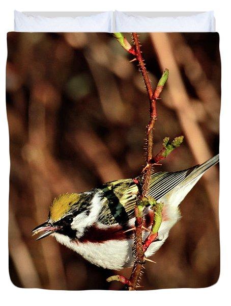 Perky Little Warbler Duvet Cover