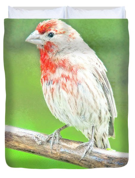 Purple Finch, Animal Portrait Duvet Cover