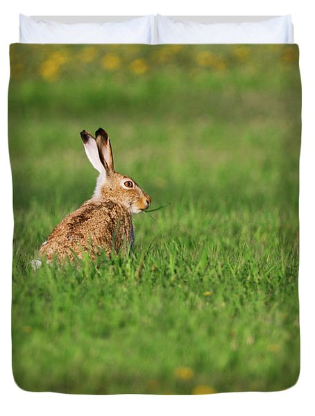 Rabbit Chews Duvet Cover