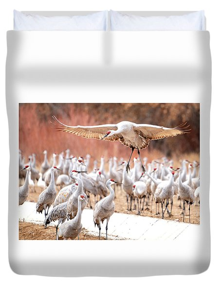 Ready Or Not, Here I Come -- Sandhill Cranes Duvet Cover