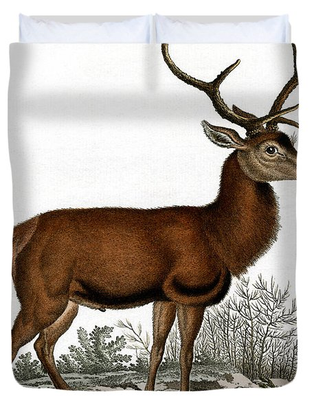 Red Deer Circa 19th Century Colored Engraving Duvet Cover