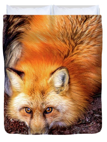 Red Fox In Canyon, Arizona Duvet Cover