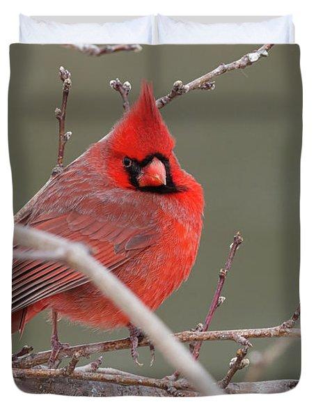Red In Winter Duvet Cover
