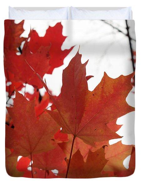 Red Maple Leaves 2 Duvet Cover