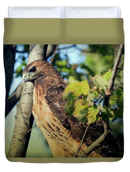 Red-tailed Hawk Looking Down From Tree Duvet Cover