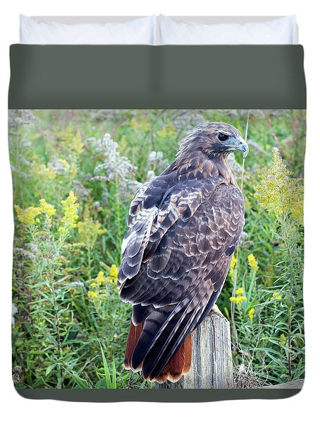Red-tailed Hawk On Fence Post Duvet Cover