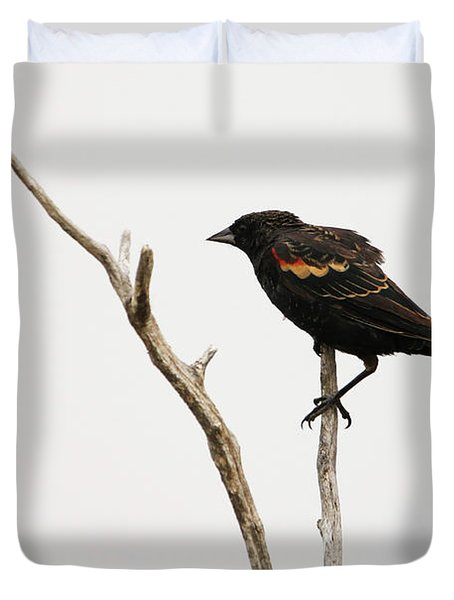 Red Winged Blackbird Duvet Cover
