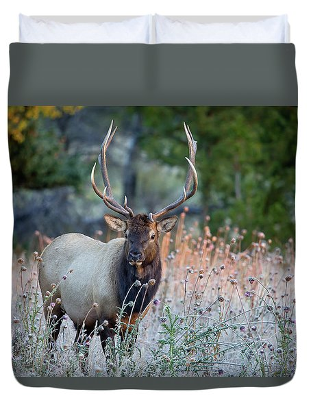 Duvet Cover featuring the photograph Rocky Mountain Wildlife Bull Elk Sunrise by Nathan Bush