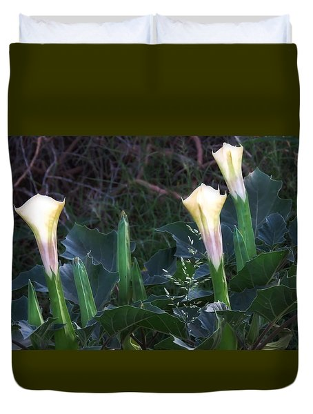 Duvet Cover featuring the photograph Sacred Datura Trio - Partial Blooms by Judy Kennedy