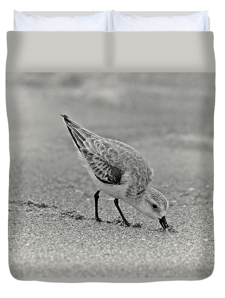 Sanderling Foraging For Food Duvet Cover