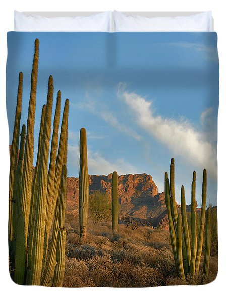 Senita Cactus, Ajo Mountains, Organ Duvet Cover