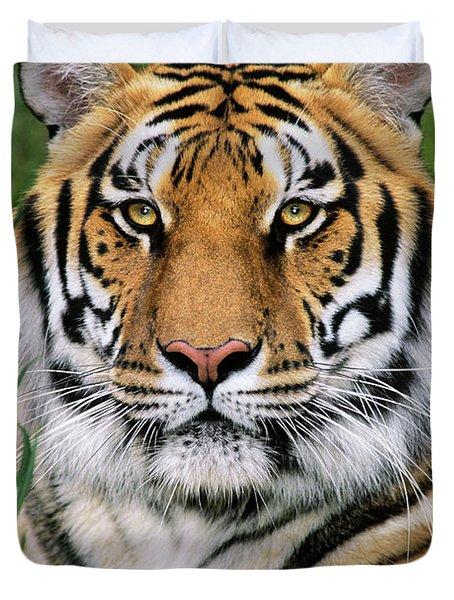 Siberian Tiger Staring Endangered Species Wildlife Rescue Duvet Cover