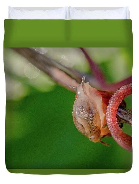 Snails Pace Duvet Cover