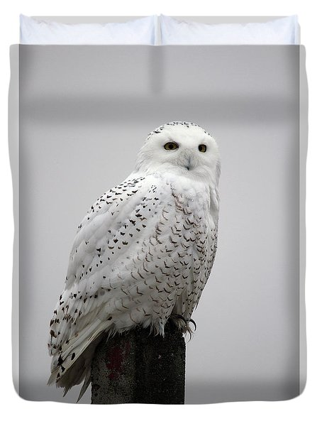 Snowy Owl In Fog Duvet Cover