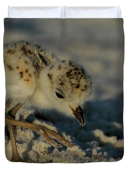 Snowy Plover On The Hunt Duvet Cover