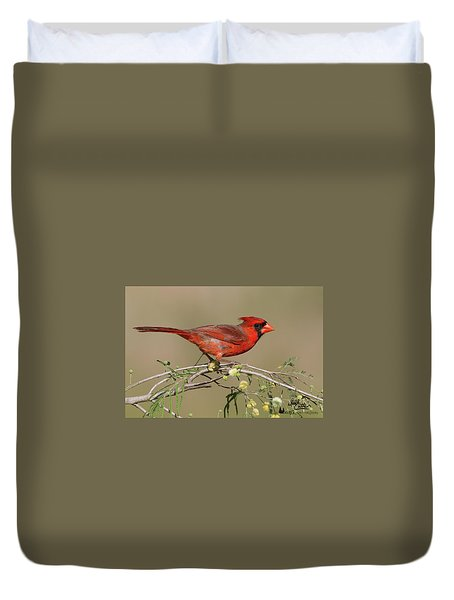 South Texas Cardinal Duvet Cover