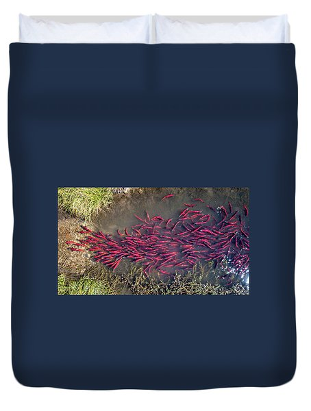 Spawning Kokanee Salmon Duvet Cover
