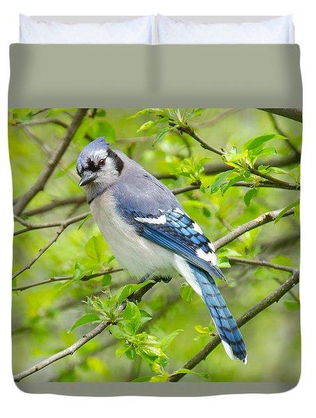 Springtime Bluejay Duvet Cover