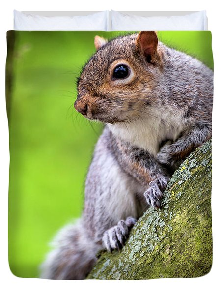 Squirrel At Greenwich Park Duvet Cover