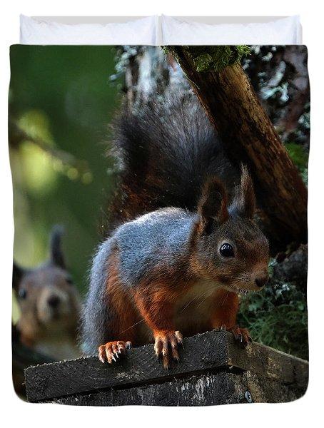 Squirrels Duvet Cover