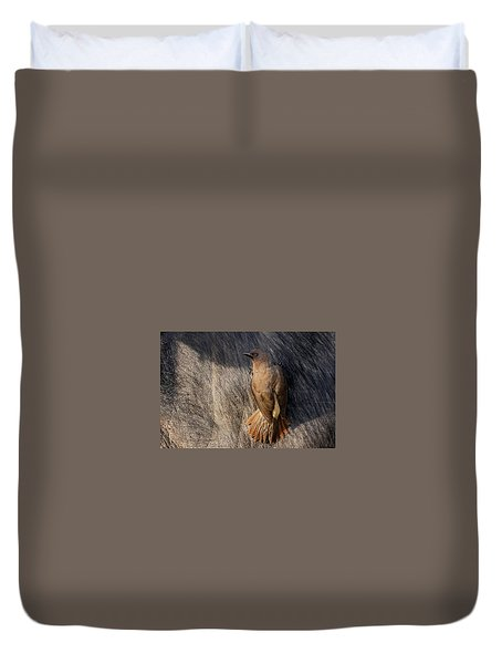 Sub-adult Yellow-billed Oxpecker On Cape Buffalo Duvet Cover