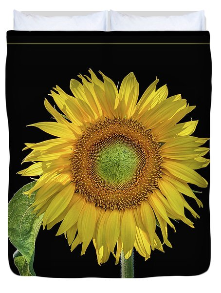 Sunflower With Leaf - Square Duvet Cover