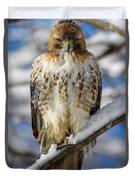 The Look, Red Tailed Hawk 1 Duvet Cover