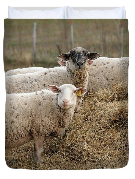 Three Sheep Duvet Cover