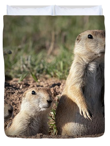 Three Young Prairie Dogs Duvet Cover