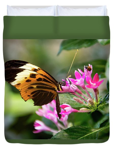 Tiger Longwing Butterfly Drinking Nectar  Duvet Cover