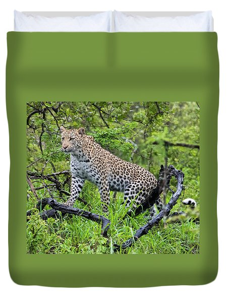 Tree Climbing Leopard Duvet Cover