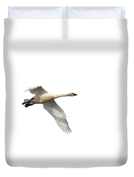 Trumpeter Swan Isolated 2018-1 Duvet Cover