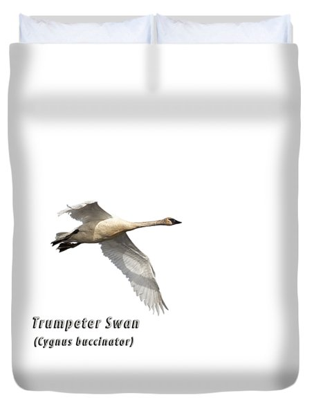 Trumpeter Swan Isolated 2018-2 Duvet Cover