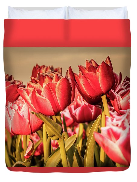 Duvet Cover featuring the photograph Tulip Fields by Anjo Ten Kate