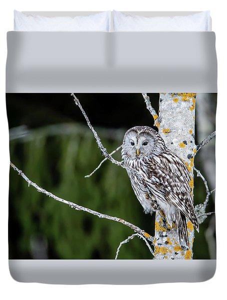 Ural Owl Perching On An Aspen Twig Duvet Cover